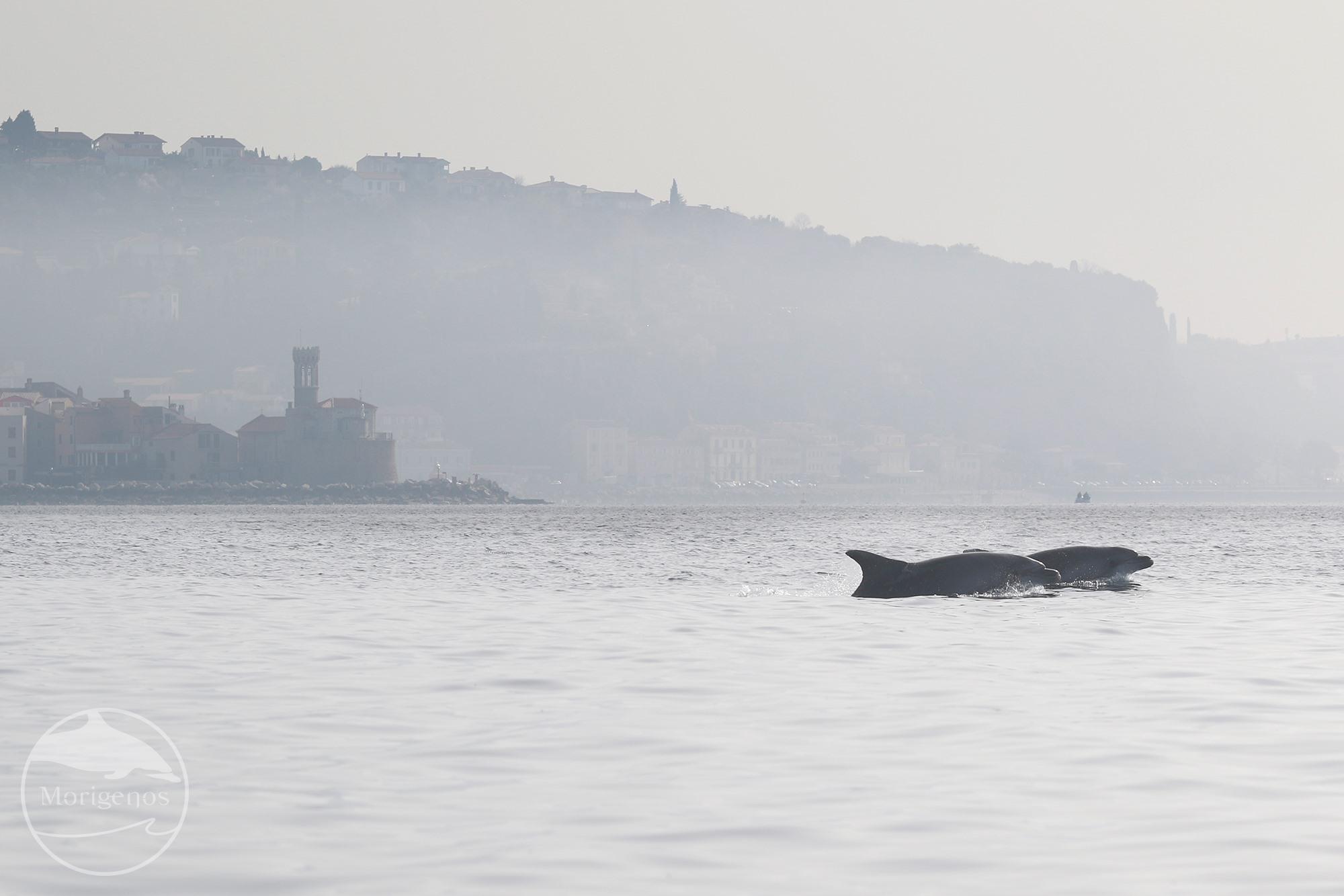 Morigenosov mesec delfinov v Mestni knjižnici Piran